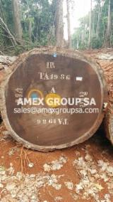 Tropical Logs Suppliers and Buyers - Iroko logs EUTR
