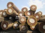 Tropical Wood  Logs For Sale - Afrormosia logs EUTR