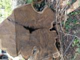 Tropical Wood  Logs For Sale - Tropical Wood Logs / Sawn