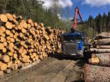 Forest Harvesting Forestry Job - Sofer Masina Transport Busteni in Romania