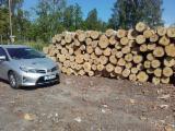 Latvia Hardwood Logs - Birch Veneer Logs 26 cm