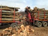 All Broad Leaved Species Firewood/Woodlogs Not Cleaved 15+ cm
