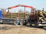 Hardwood Logs importers and buyers - 15+ cm Firewood in Romania
