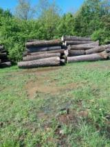 Hardwood  Logs For Sale Romania - 30-100 cm Oak (Turkey oak, mosscup oak, quercus cerris) Saw Logs Romania