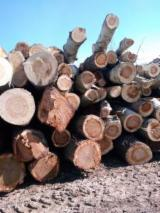 Hardwood  Logs For Sale Romania - 30-75 cm Poplar Saw Logs Romania