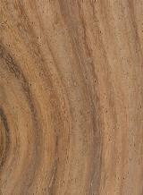 Solid Wood Components For Sale - CONACASTE (GUANACASTE) Enterolobiumcyclocarpum