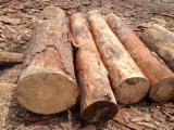 Softwood  Logs - Looking for reliable supplier of Pine logs from Europe