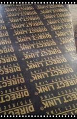 Vend Contreplaqué Filmé (Noir) Peuplier Clone I214 20 mm Chine
