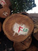 Tropical Logs Suppliers and Buyers - a/b/c, 500 à 800 mm, Pau Rosa (Pau Ferro, Boto), Saw Logs
