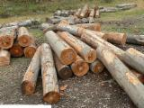 Hardwood  Logs - We want buy beech