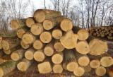 Hardwood  Logs For Sale - OAK Logs for sale