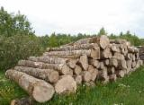 Hardwood  Logs For Sale - ASH logs for sale