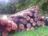 Hardwood  Logs For Sale - Beech logs ABC, 30-39cm,