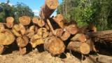 Tropical Wood  Logs For Sale - Ipe Round logs