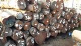 Tropical Wood  Logs For Sale - Acapu, Wacapou round logs