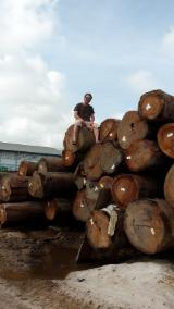 Tropical Wood  Logs For Sale - Angelique Round logs