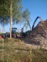 Transport Obróbki Drewna - Dołącz Do Fordaq - Transport Drogowy , 3 pełne ciężarówki Jeden raz