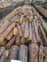 劈好的薪柴-未劈的薪柴 薪碳材/未开裂原木 红松