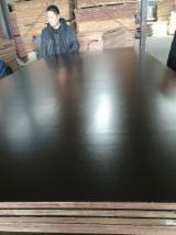 Plywood – Kahverengi Film Kaplı, Okaliptüs
