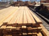 Softwood  Sawn Timber - Lumber - Siberian LARCH high quality