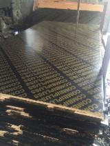 null - Poplar / Hardwood Core Film Faced Plywood
