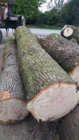 Hardwood  Logs For Sale - Veneer Logs, Oak (European)