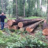 Softwood  Logs - Douglas Fir Logs