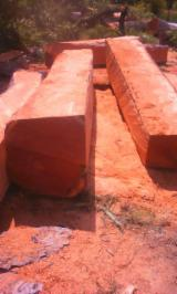 Tropical Wood  Logs For Sale - Wood