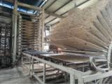 Holzwerkstoffen Zu Verkaufen - OSB Platten, 6~22 mm