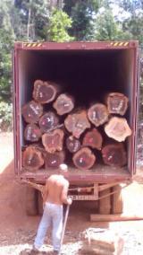 Tropical Wood  Logs - Purpleheart Logs - Peltogyne pubescens