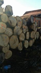 Hardwood Logs importers and buyers - Oak logs 4th or better grade