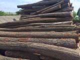 Wälder Und Rundholz Europa - Schnittholzstämme, Linde