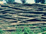 Firewood, Pellets and Residues Supplies - Oak (Europe) Firewood/Woodlogs Cleaved 350 RON