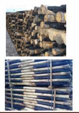 Tvrdo Drvo  Trupci - Cilindrični Obrubljene Okrugle Grede , Chestnut (Europe)