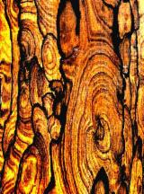 Tropical Logs for sale. Wholesale Tropical Logs exporters - ZIRICOTE CORDIA DODECANDRA