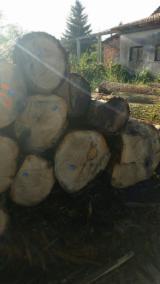 Hardwood  Logs - Oak Sawn Logs (European) 1st and 2nd grade