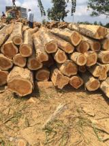 Tropical Wood  Logs For Sale - Teak logs