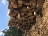 Peeling Logs - Ash logs