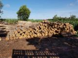 Tropical Wood  Logs - Sell Teak Logs 500 cbm and Teak forest