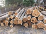 Tropical Wood  Logs - Teak logs, 300 cbm 480usd/m3