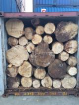 Tropical Wood  Logs - GMELINA ROUND LOGS FOR SALE