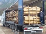 Hardwood  Logs - 8 - 25 cm, Acacia, Cylindrical trimmed round wood