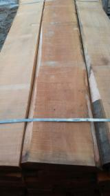 Hardwood  Unedged Timber - Flitches - Boules - Purchasing Unedged Beech Sawn Lumber