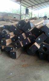 Tropical Wood  Logs - 50 cm Cocobolo Palissander Peeling Logs in Panama