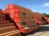 Laubholz  Blockware, Unbesäumtes Holz - Einseitig besäumte Bretter, Linde (Basswood)