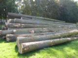 Hardwood  Logs - 27+ cm, Poplar, robusta clone, Veneer Logs