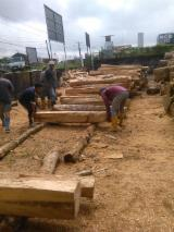 Tropical Wood  Logs - Sale of Teak wood logs