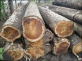Tropsko Drvo  Trupci - Za Rezanje, Teak