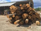 Hardwood Logs Suppliers and Buyers - 30+ cm, Oak (European), Saw Logs