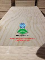 Find best timber supplies on Fordaq - Radiata Pine (Pinus radiata, insignis)(South America), E0 E1 E2, Natural Plywood